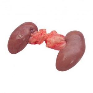 Frozen Pork Kidney